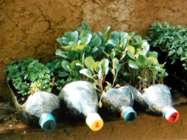 Recycled plastic bottles micro garden flickr photo - Plastic bottles for gardening ...