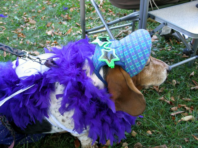 Woofstock Dog Show