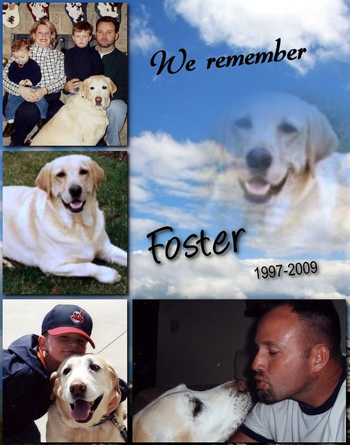 Memorial Pet Collage In Clouds Flickr Photo Sharing
