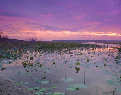 light naturaleza lake sunrise florida scenic paisaje jackson fl tallahassee lilypads paysage hdr