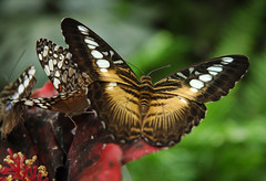 2010.09 QUEUE-LEZ-YVELINES - La serre aux papillons