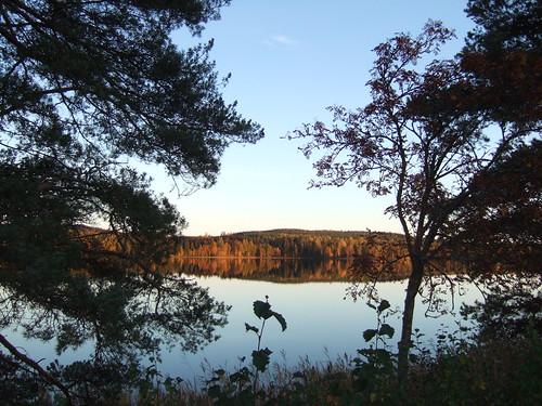 lake tree pine finland fallcolors autumncolours keuruu europeanrowan pohjoisjärvi