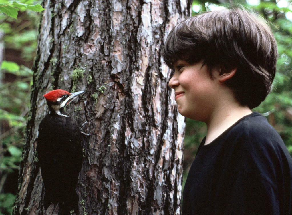Laura's son Tom with a Pileated Woodpecker she was rehabbing