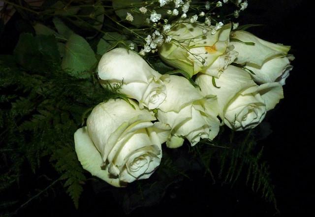 Pin rosas blancas significado del color de las fondo on - Significado rosas amarillas ...