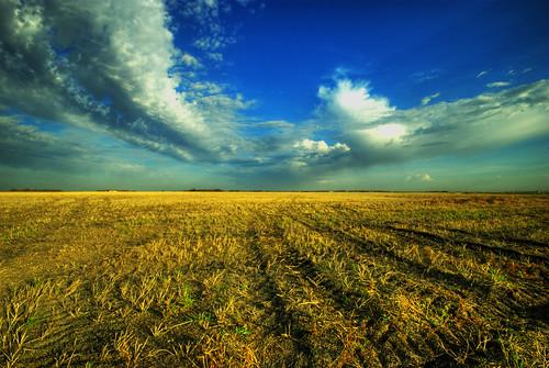 wheat manitoba hdr stubble