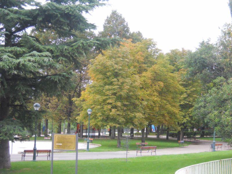 Árboles en otoño 6