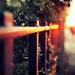 Molten fence by Kirstin Mckee