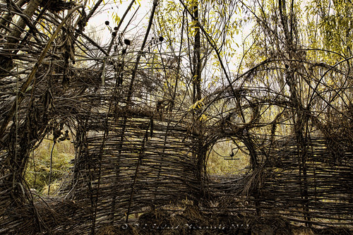 willow dome by D J England