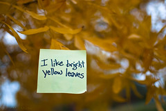 I like bright yellow leaves