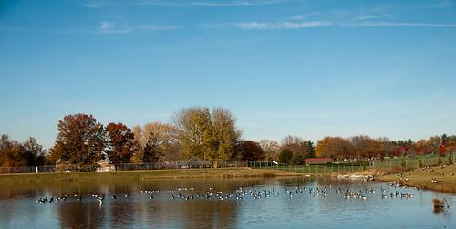 parks ponds westminstermd carrollcountymd