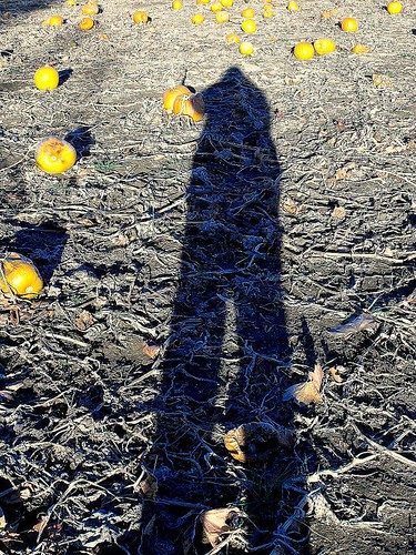 autumn sunset shadow selfportrait fall me field pumpkin afternoon pennsylvania farm pa loretta patch lehighvalley selfie elongated eastonpa northamptoncounty palmertownship raubsfarmmarket tatamyroad