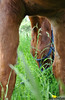 <p>Ein Pferd mal anders.. <br /> <br /> Unusual perspecitve: A horse in a different point of view..</p>