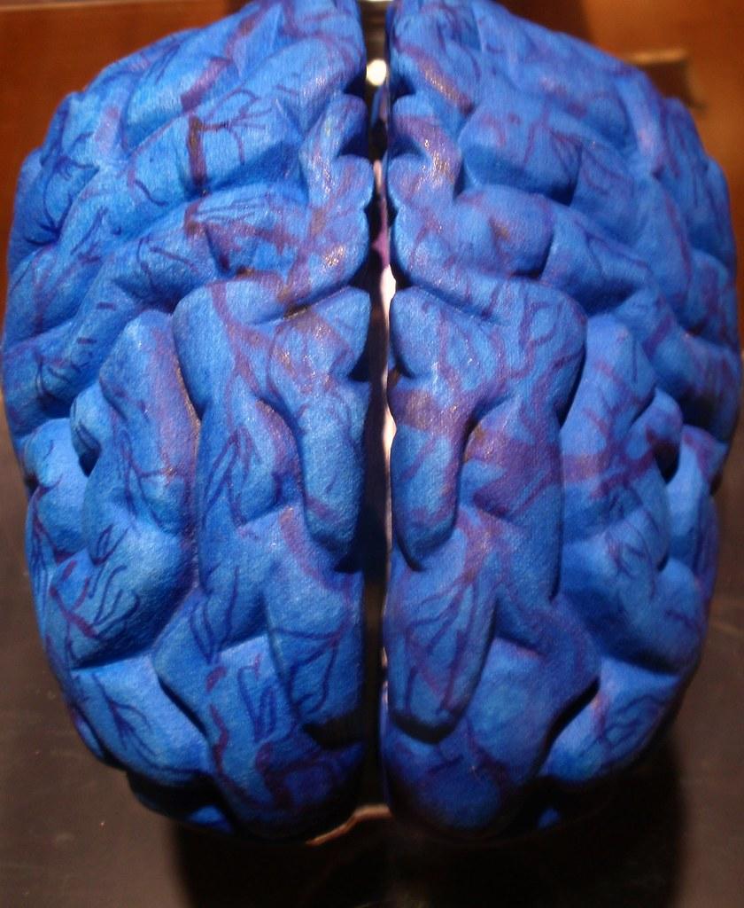 El cerebro, la gran cepa azul