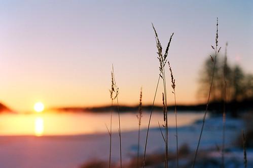 morning winter cold film field sunrise vintage suomi finland 50mm nikon dof bokeh straw hay f18 fm depth savonlinna
