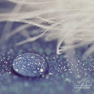 The feather and the waterdrop...