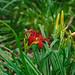 Blüte in der Flora Köln von nekudo