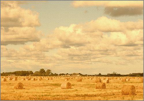 summer field yellow canon landscape latvia bale lettland aigarsr