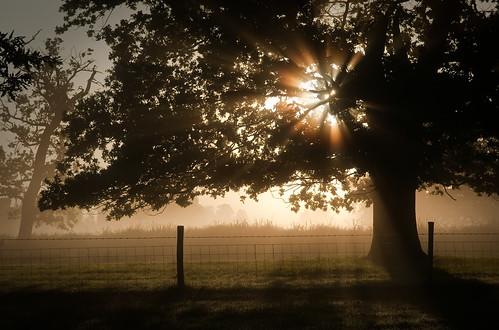 mist sunrise fence oak sunbeams langleypark georgegreenfield langleyparkcountrypark