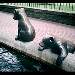 Bears in Pioneer Square