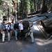 Tunnel Log on Congress Trail by howardignatius