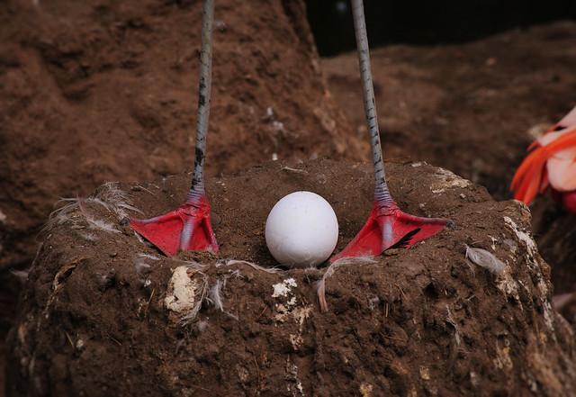 Flamingo Nests Flamingo Nest | Explor...