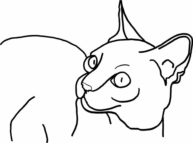 Contour Line Drawing Of A Cat : Contour drawing flickr photo sharing