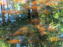 Tar River and Wilton Slopes