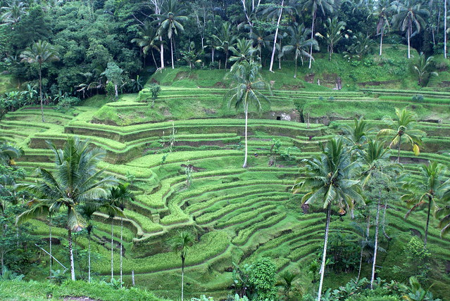 Tegallalang Rice Terraces Tour