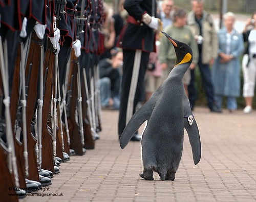 Nils Olav the Penguin inspects the Kings Guard of Norway after being bestowed with a knighthood at Edinburgh Zoo