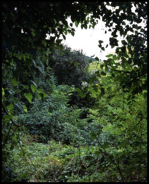 Mamiya rb67 : nature 1