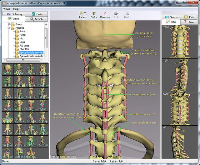 Human anatomy software