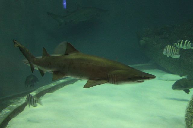 Aquarium In North Carolina