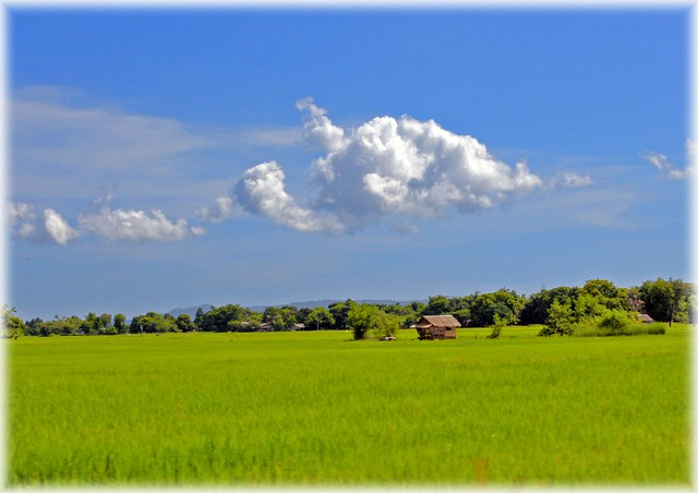 ~Kubo sa Luntiang Bukid~