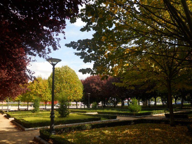 Tilo en otoño 9