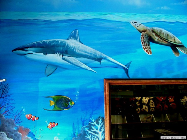 Aquarium mural flickr photo sharing for Aquarium mural
