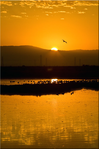 birds clouds sunrise reflections dawn golden bay san francisco day clear 100views marsh palo alto preserve baylands 7450