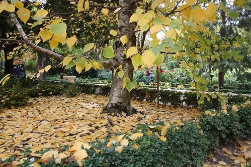 Bonito oto o en el bot nico de madrid espacios vivos for Arboles del jardin botanico