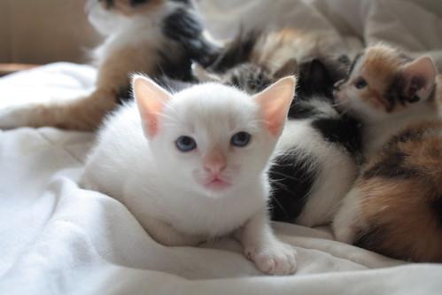 Rações para gatos em crescimento - Petlove - O Maior Petshop Online do Brasil