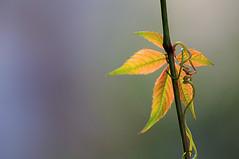 l'automne sur le Rhône