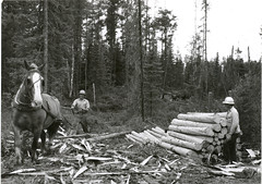 logging(1.0), monochrome photography(1.0), forest(1.0), black-and-white(1.0),