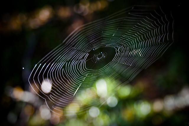 Bokeh web