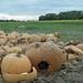 Cimetière de citrouilles - Cadavres post halloween by ***Camille***