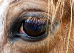 mon ami le cheval
