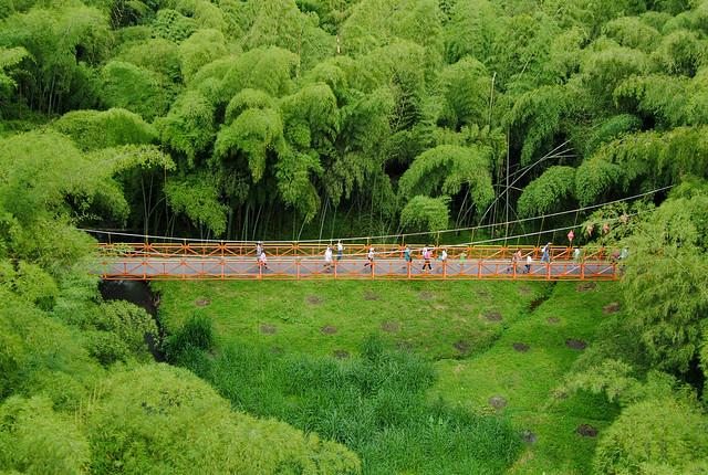 puente y guaduales bambú en el Parque Nacional del Café