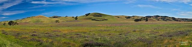 Wildflowers near Paicines, CA