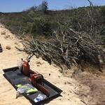 Clearing of alien vegetation