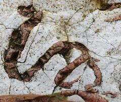 Serpent stone, Rosemarkie