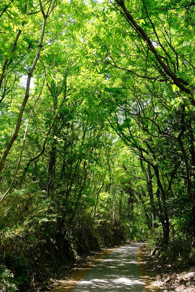 forest @ teshima