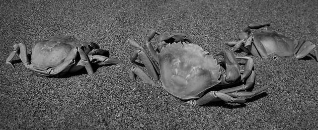 crab cemetary