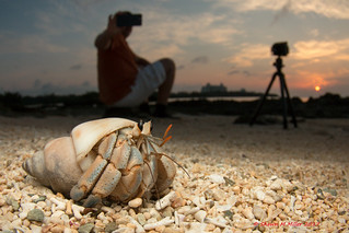 Hermit crabs of Okinawa by Shawn M Miller